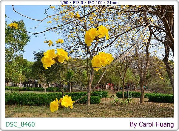 DSC_8460