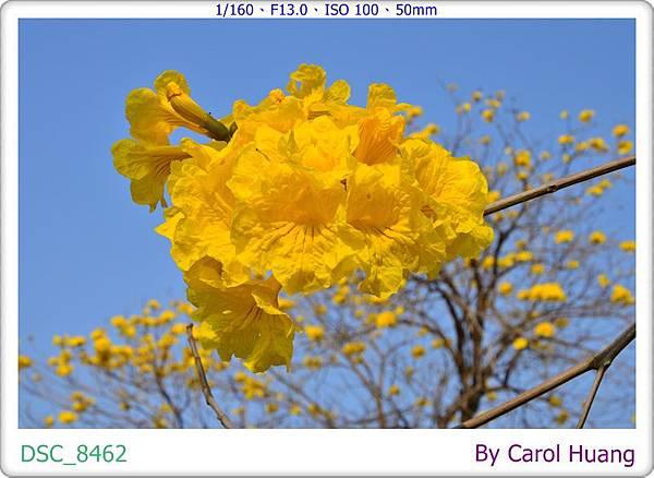 DSC_8462