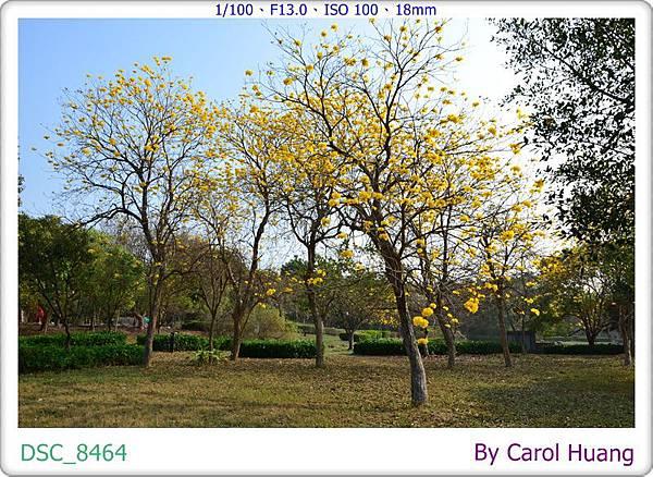 DSC_8464