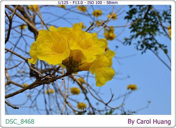 DSC_8468