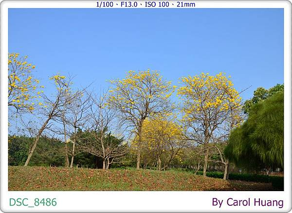 DSC_8486