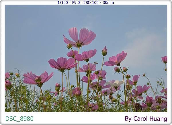 DSC_8980