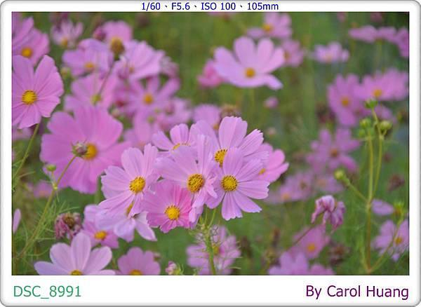 DSC_8991