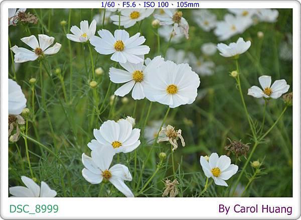 DSC_8999