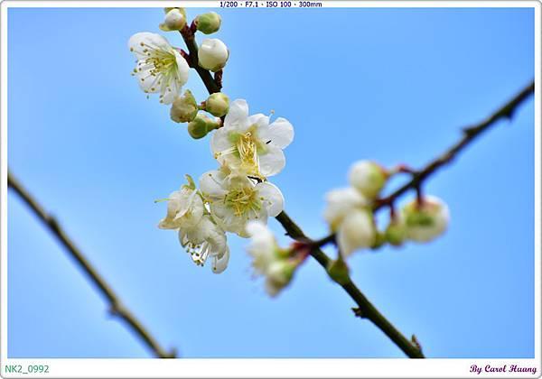 NK2_0992.JPG