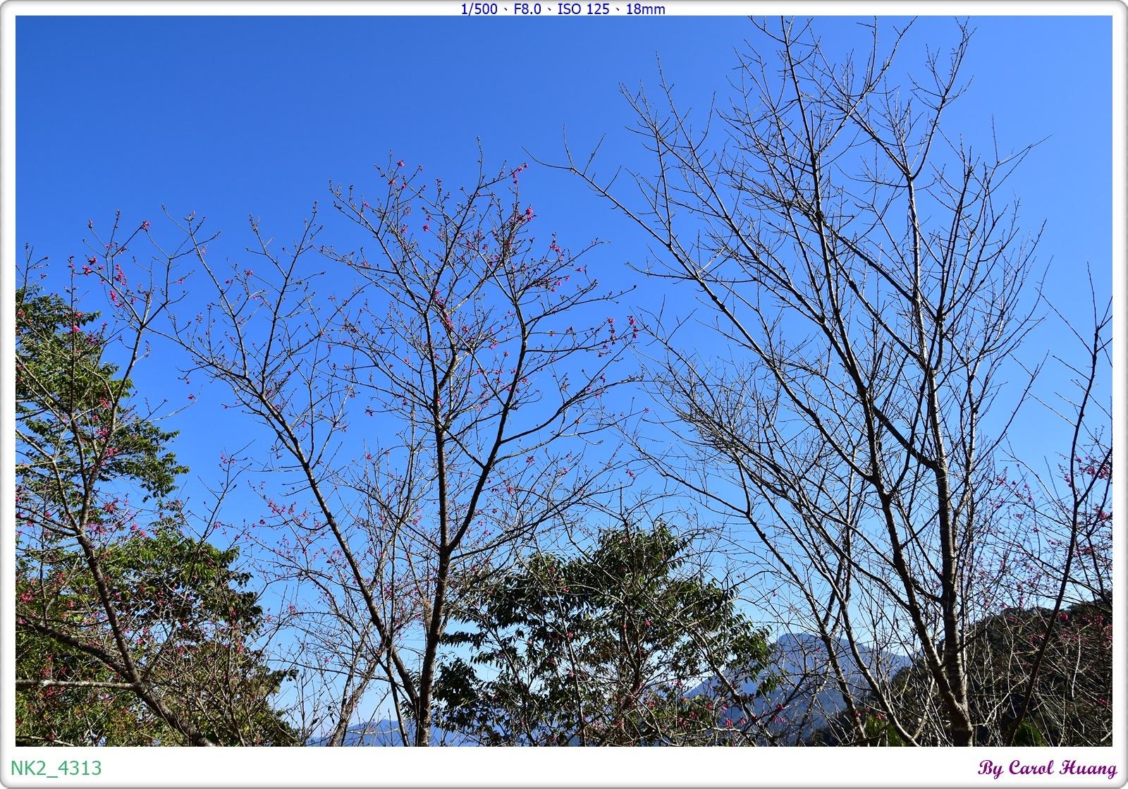NK2_4313.JPG