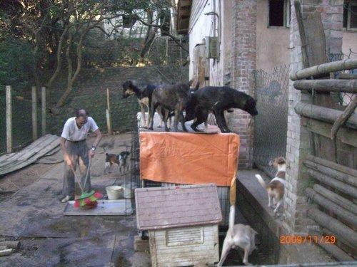 東海狗場的阿伯與狗狗們