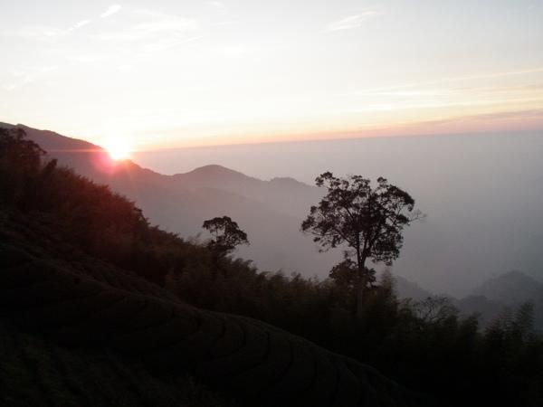 茶園的夕陽~
