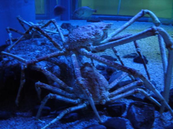 外星人大螃蟹