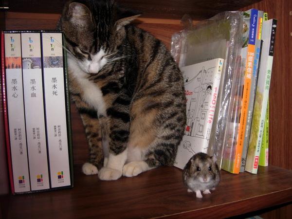 擠在同一格書櫃