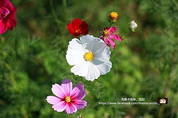 IMG_5274_副本.jpg