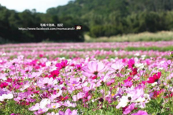 IMG_5295_副本.jpg