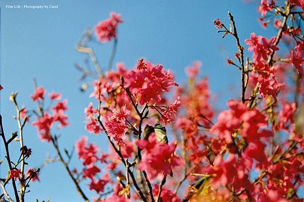 0225profotoXL_006.jpg