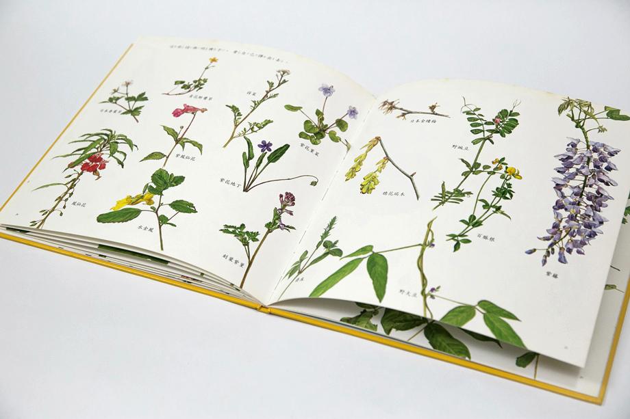 種子:種子的傳播方法