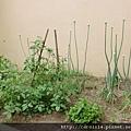 2010_12 Garden