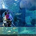 Melbourne Aquarium