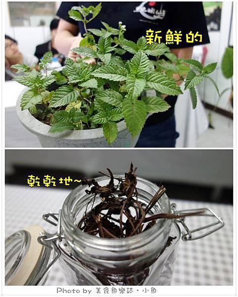 仙草植物.jpg