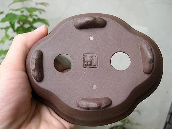 DSCN6619.JPG