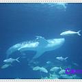 IMG_0994_nEO_IMG.jpg