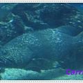 IMG_0995_nEO_IMG.jpg