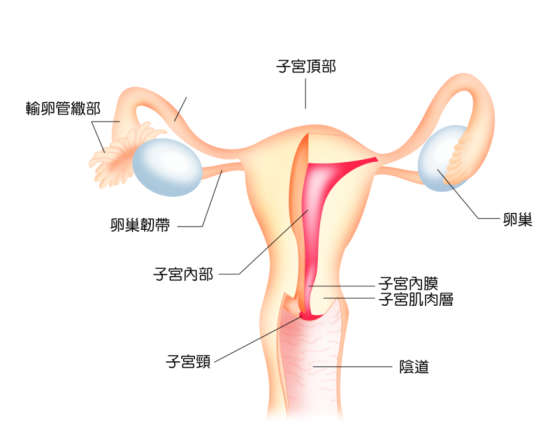female_structure.jpg
