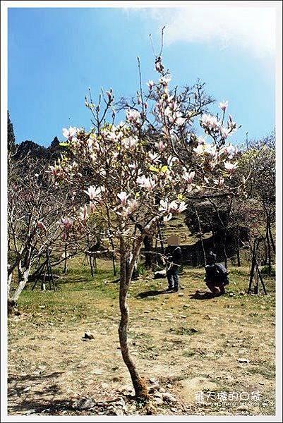 Ali Mountain Sakura (54)