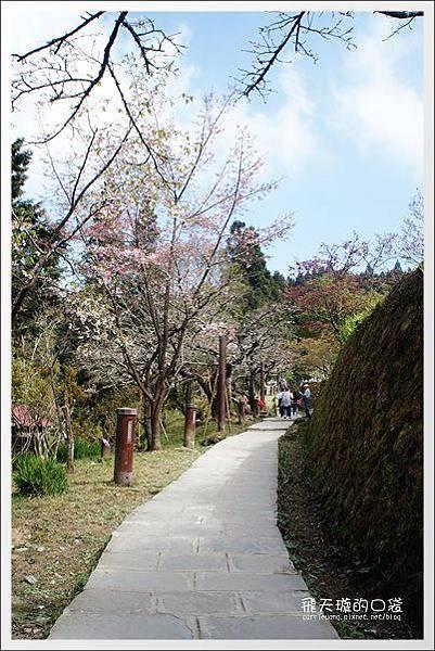Ali Mountain Sakura (68)