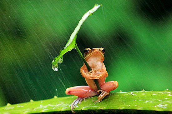 frog wearing umbrella