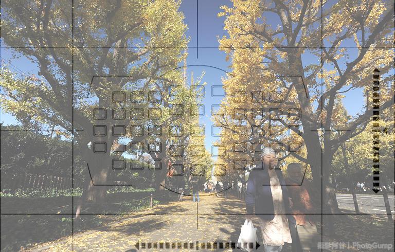 東京銀杏+對焦點