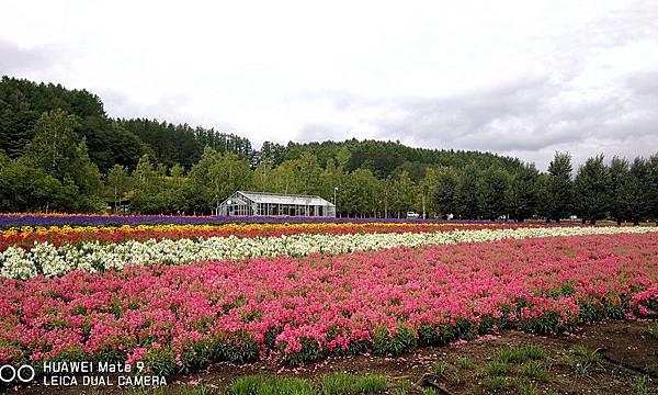 富田農場44.jpg