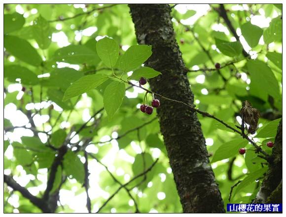 閒聊2011-05-19.jpg