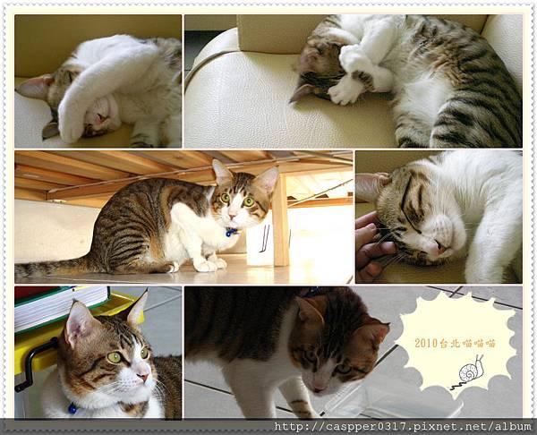 2010台北喵喵喵