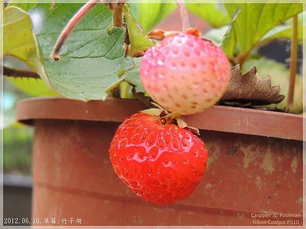 20120610草莓