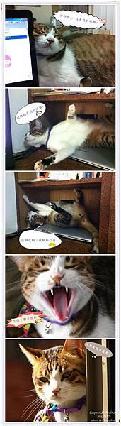 囂張的貓B