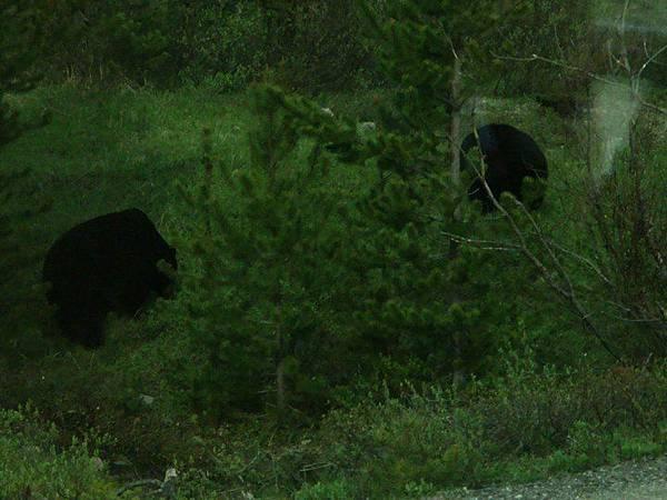 大黑熊 2.jpg