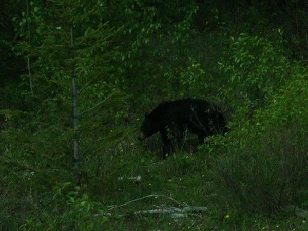 大黑熊.jpg