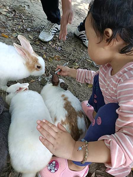TO House兔子庭園餐廳15.jpg