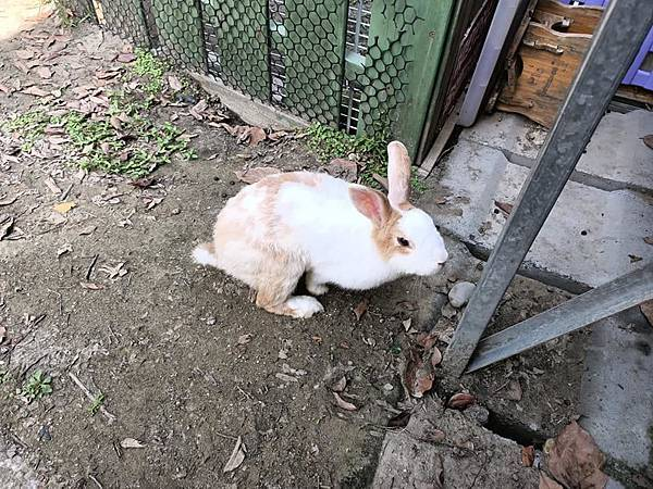TO House兔子庭園餐廳29.jpg