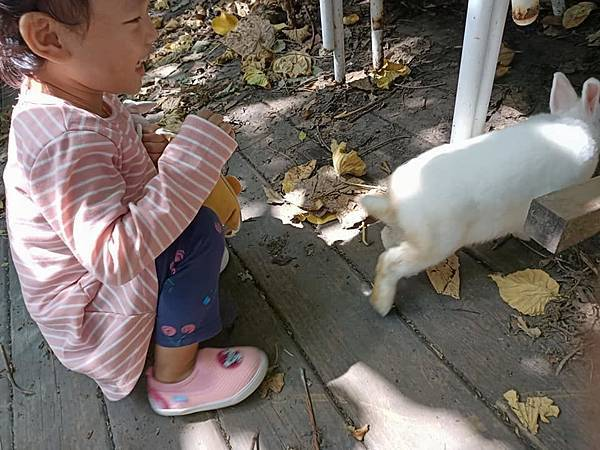 TO House兔子庭園餐廳26.jpg