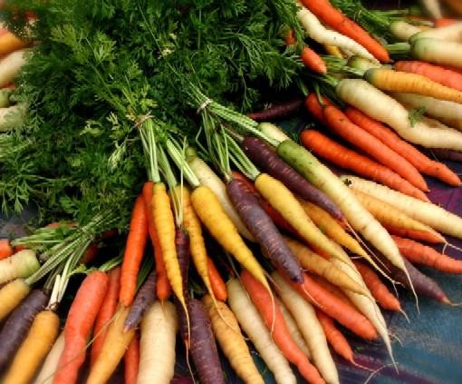 Organic%20Carrots.jpg