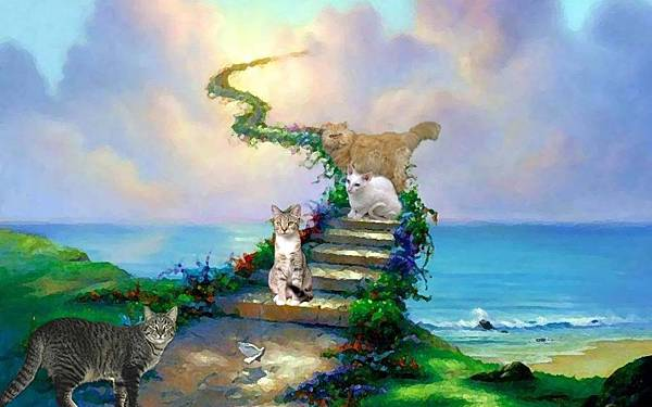 1280x800-cat in heaven.jpg