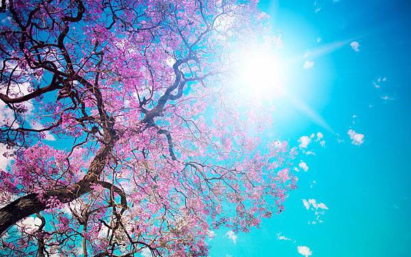 Free_Scenery_Wallpaper__Includes_the_Scene_of_Blooming_Spring_Simply_Good_and_Natural.jpg