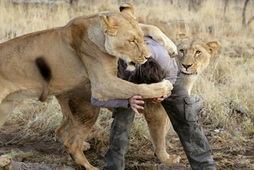 lion04.jpg
