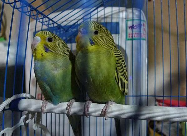 2 bird 2.jpg