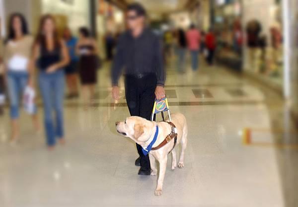 巴西導盲犬.jpg