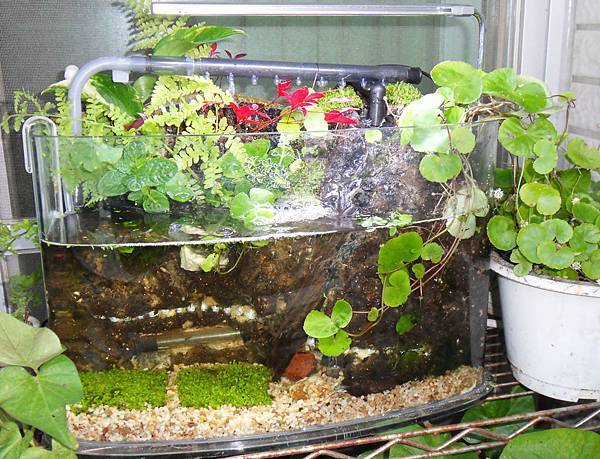 01_一尺自製半水陸缸