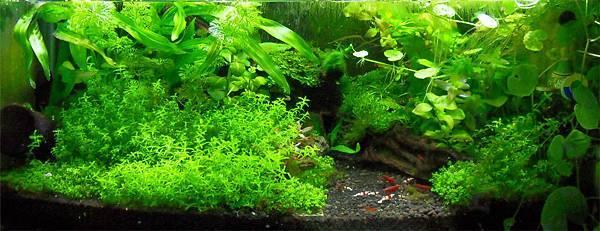 03_2尺草蝦缸