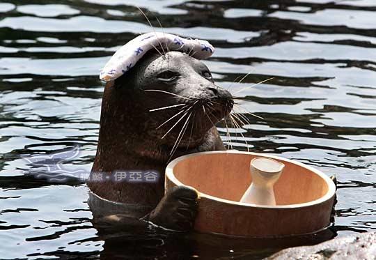 日本海豹.jpg