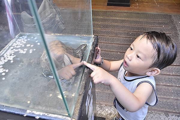 2010-07-03淡水002