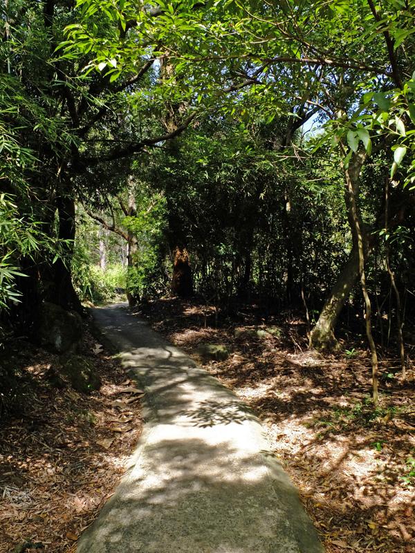 2013-11-09忠義山親山步道066.jpg